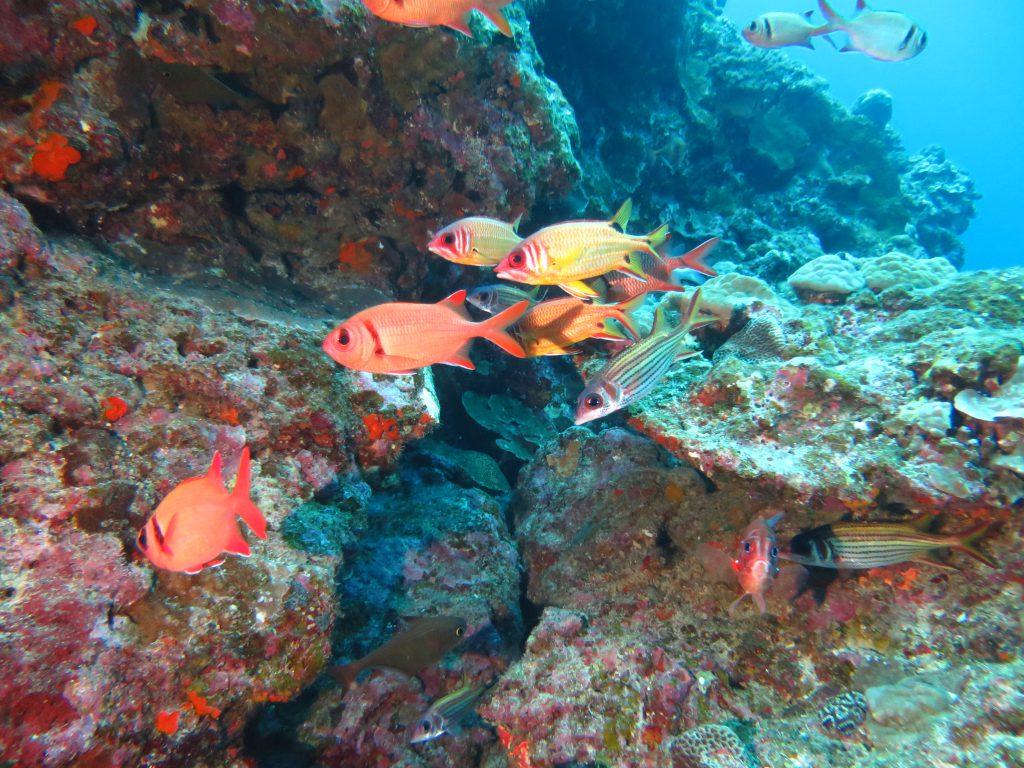 WAKON WAKONブログ 沖縄旅行