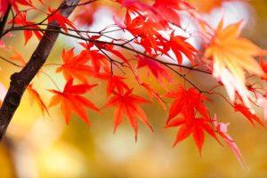 食欲の秋!!